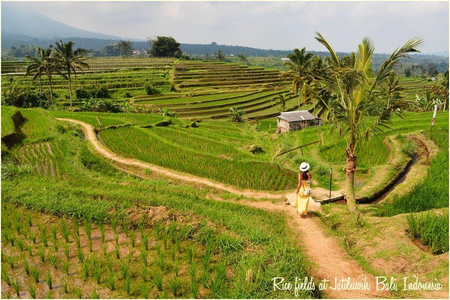 Rice_fields_at_Jatiluwih__Bali,_Indonesia-txt-irfan