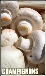 champignons_agaricus-tumb-re