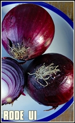 onion-3385081_1920-tumb-re