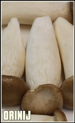 orinji mushroom-tumb-re