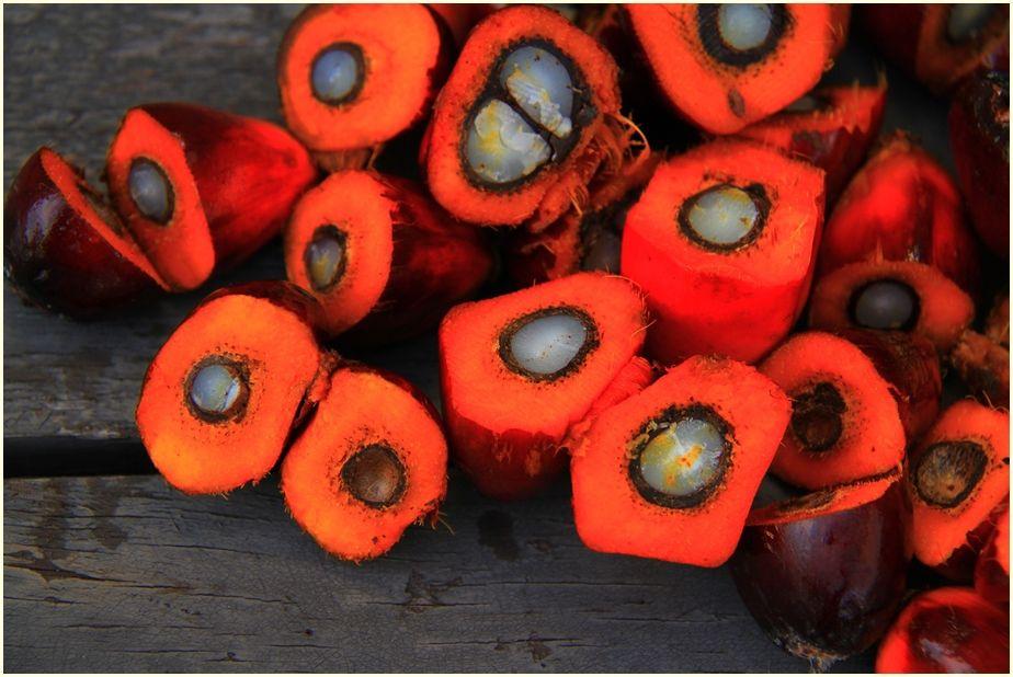 palm-oil-1022012_1920-cr-ir