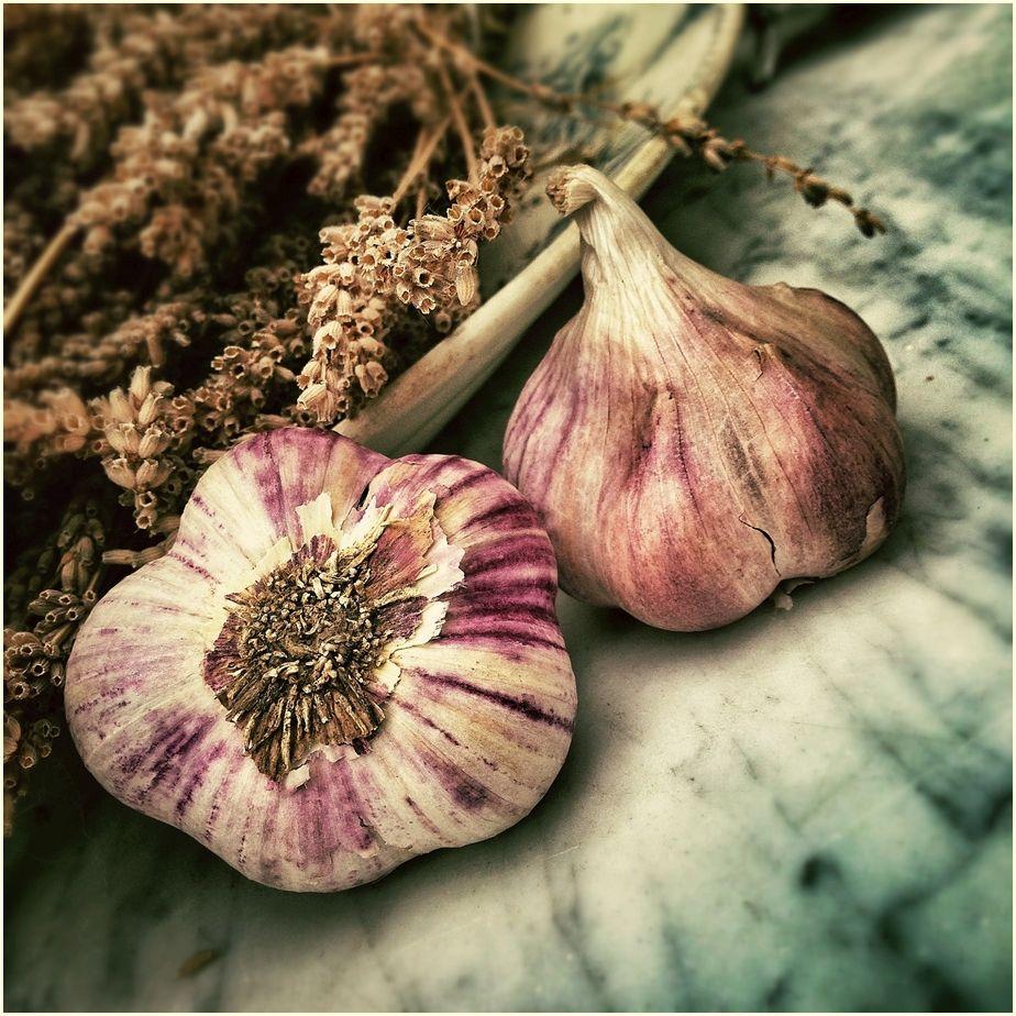 garlic-139659-cr-ir